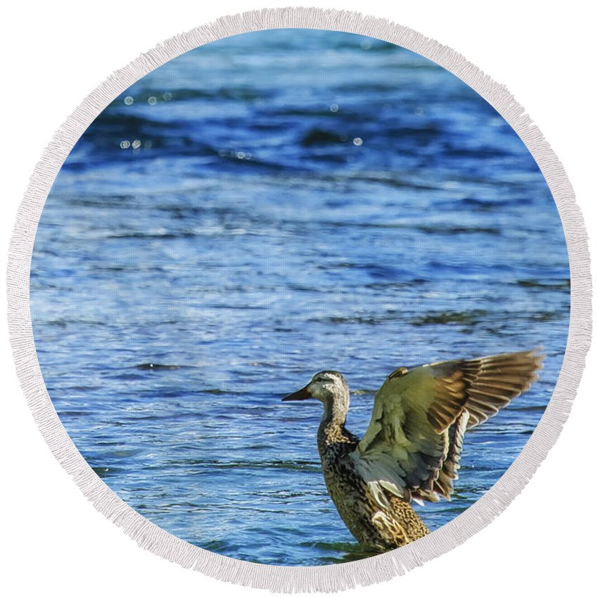 Mallard Round Beach Towel featuring the photograph Wings Aflutter by Belinda Greb