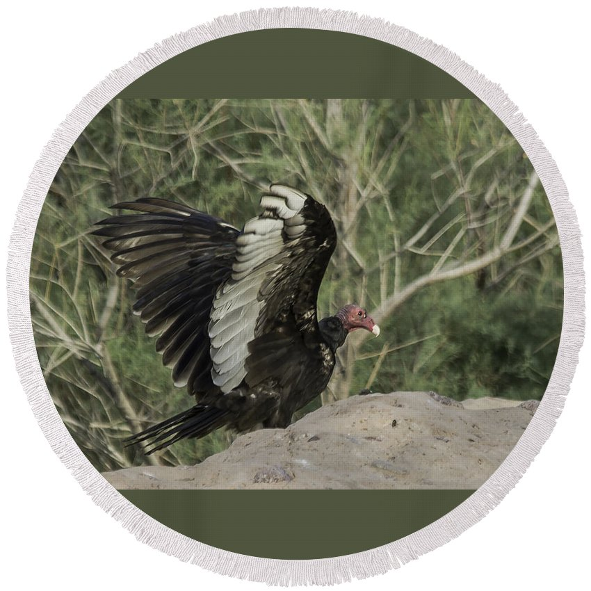 Vulture Round Beach Towel featuring the photograph Wings Up by Lorraine Harrington