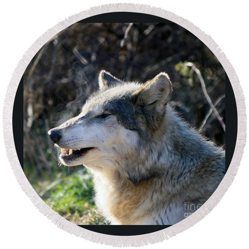 Wolf Round Beach Towel featuring the photograph Winter Breathing by Neal Eslinger