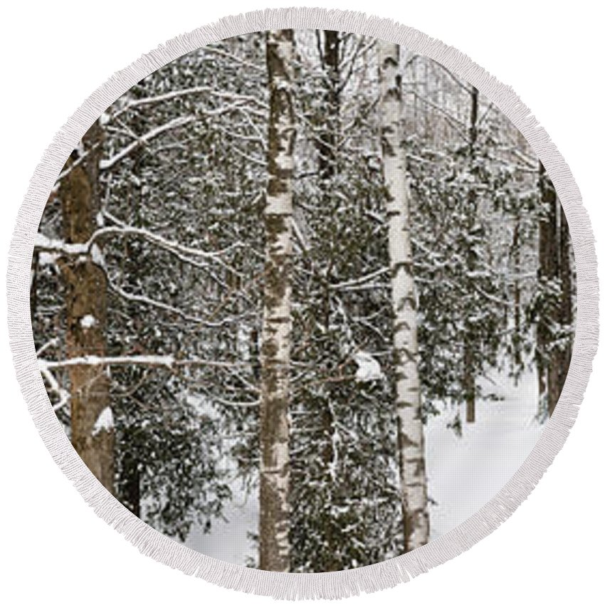 Forest Round Beach Towel featuring the photograph Winter Forest Landscape Panorama by Elena Elisseeva