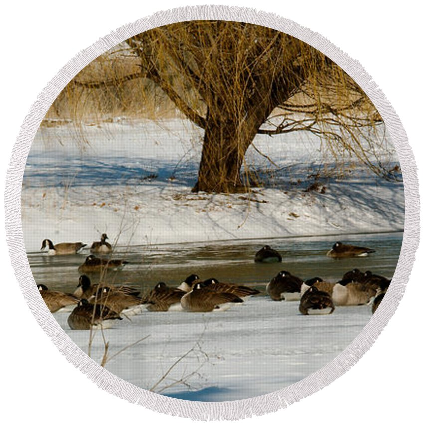 Winter Round Beach Towel featuring the photograph Winter Geese - 01 by Larry Jost