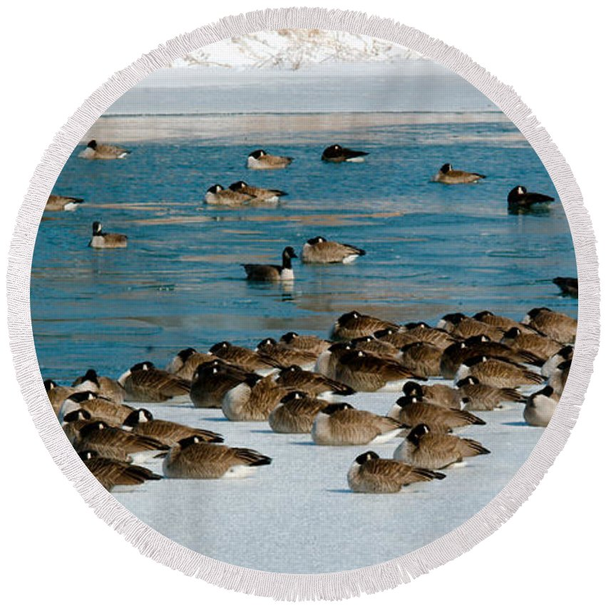 Winter Round Beach Towel featuring the photograph Winter Geese - 05 by Larry Jost
