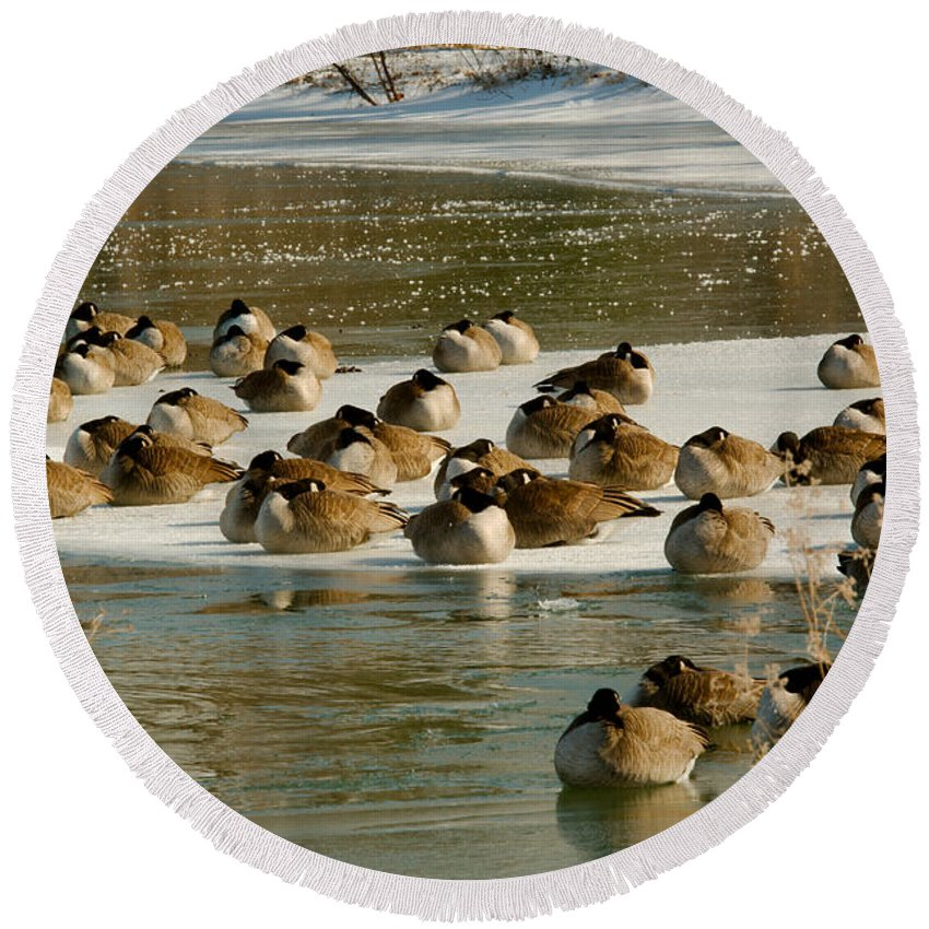 Winter Round Beach Towel featuring the photograph Winter Geese - 06 by Larry Jost