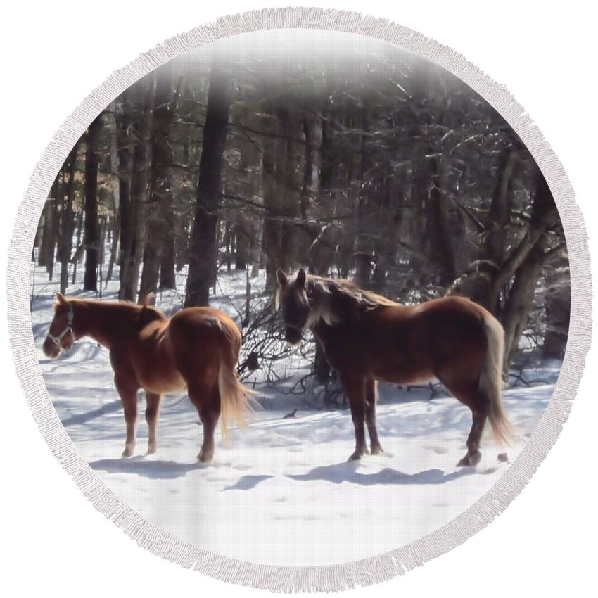 Horses Round Beach Towel featuring the photograph Winter Shadow Horses by MTBobbins Photography