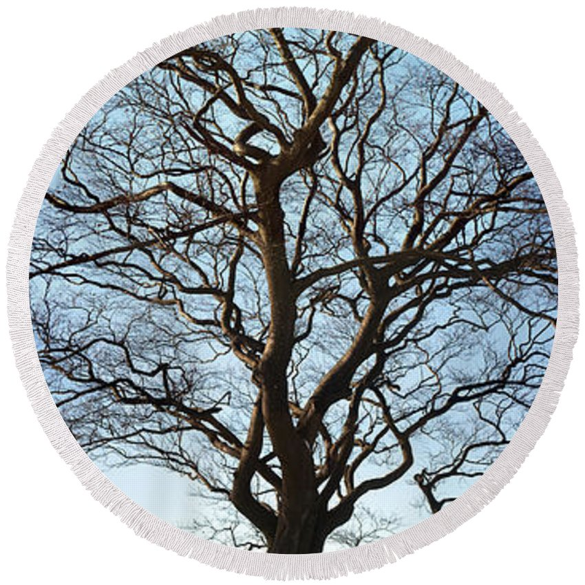 Clydebank Round Beach Towel featuring the photograph Winter Tree by Antony McAulay