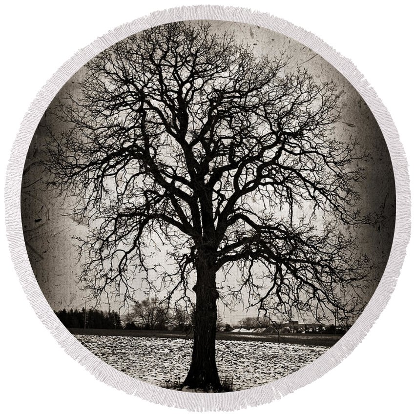 Lonely Round Beach Towel featuring the photograph Winter Tree by Elena Elisseeva