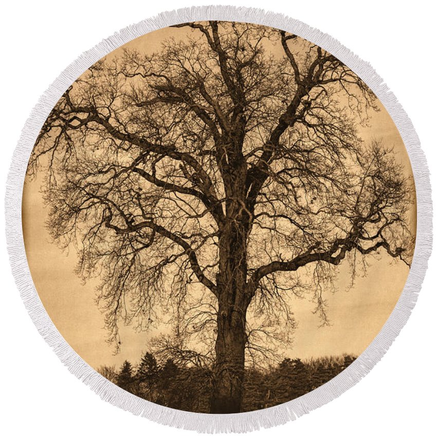 Black Round Beach Towel featuring the photograph Winter Tree - Old by Nick Field
