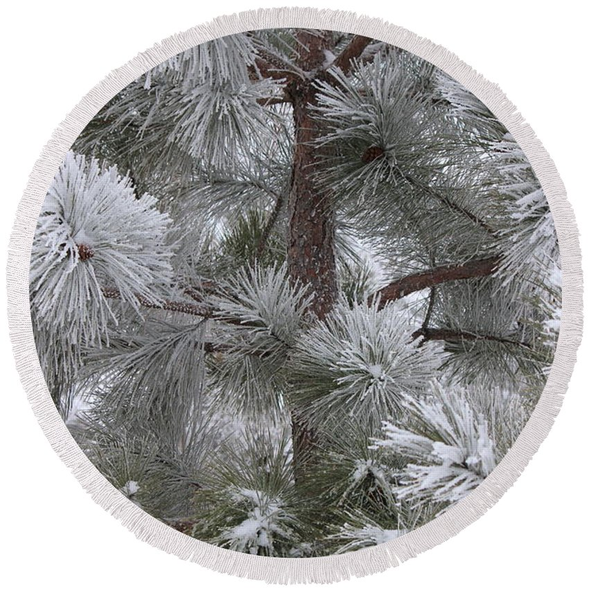Pine Tree Round Beach Towel featuring the photograph Winter's Gift by Penny Meyers