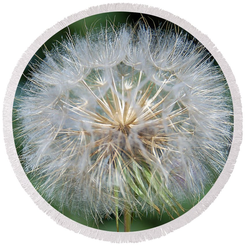 Dandelion Round Beach Towel featuring the photograph Wish by Aimee L Maher ALM GALLERY