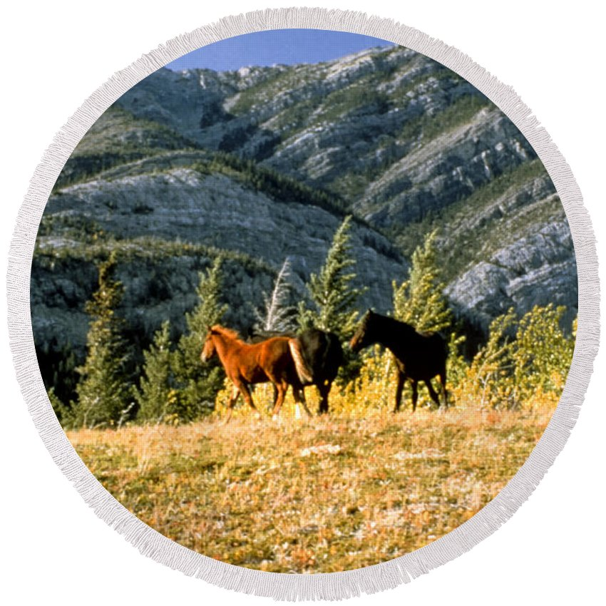 Alberta Round Beach Towel featuring the photograph Wlid Brumbies by Roderick Bley