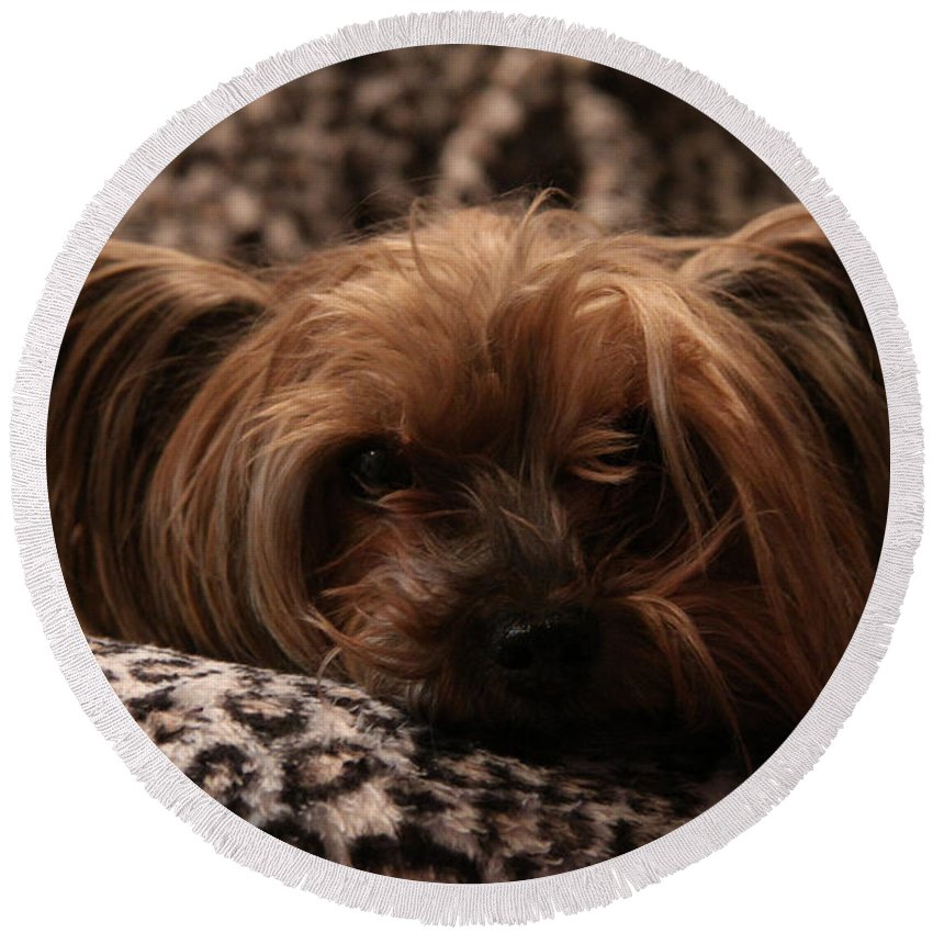 Dog Round Beach Towel featuring the photograph Woe Is Me by Alyce Taylor
