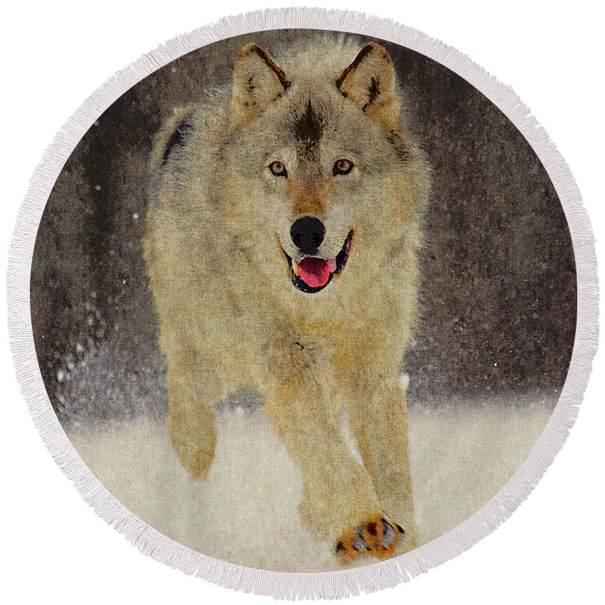 Wolf Round Beach Towel featuring the photograph Wolf 1 by Ingrid Smith-Johnsen