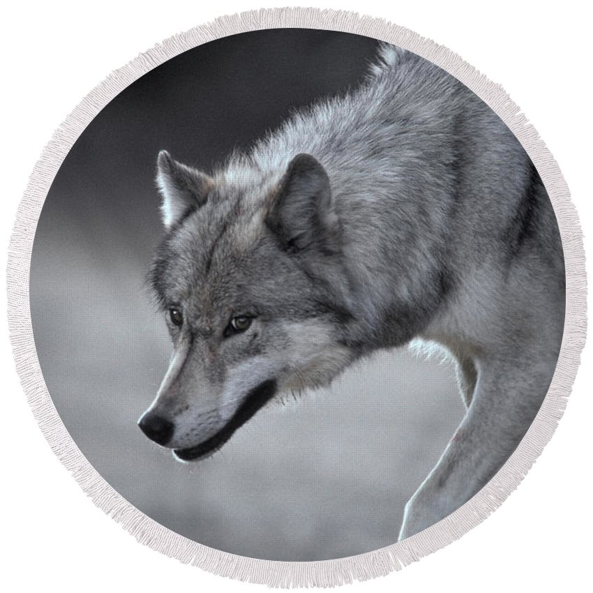 Animal Round Beach Towel featuring the photograph Wolf by Ron Sanford