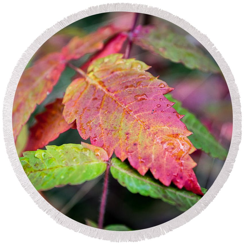 Fall Round Beach Towel featuring the photograph Wonder Leaf by Bill Pevlor
