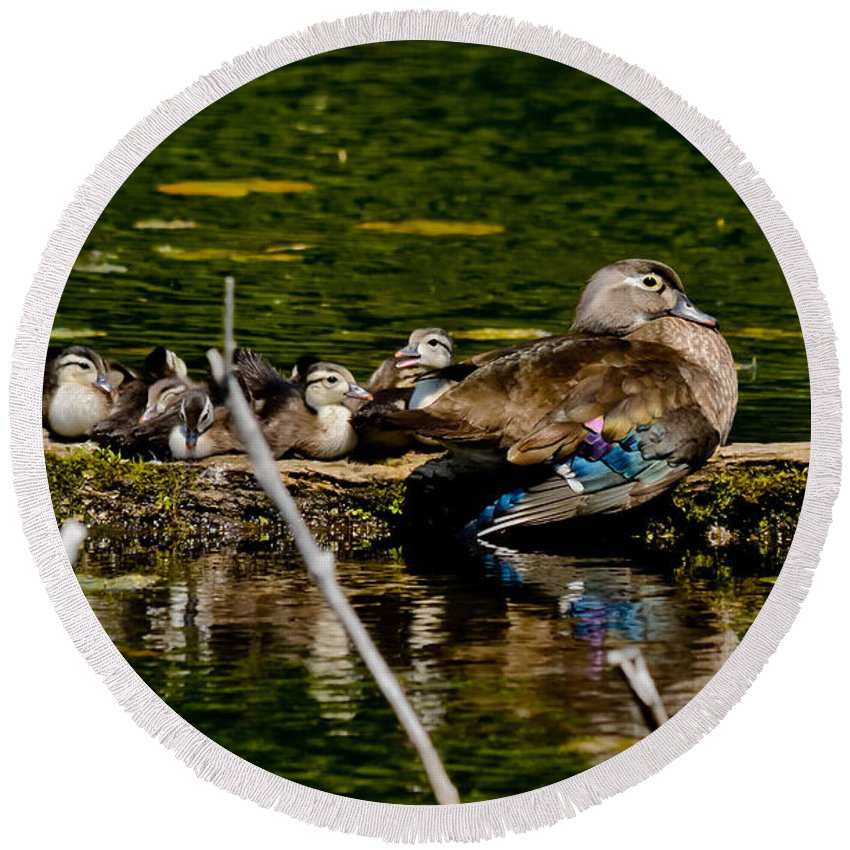 Wood Ducks Round Beach Towel featuring the photograph Wood Duck Rest Time by Cheryl Baxter