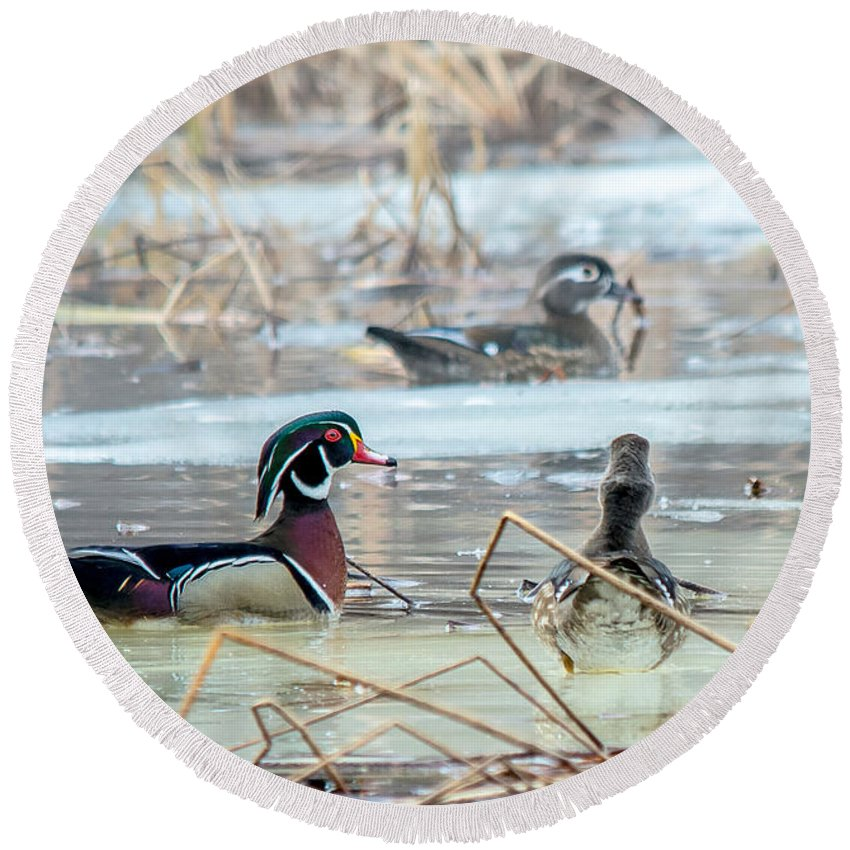 Mist Round Beach Towel featuring the photograph Wood Ducks In The Mist by Cheryl Baxter
