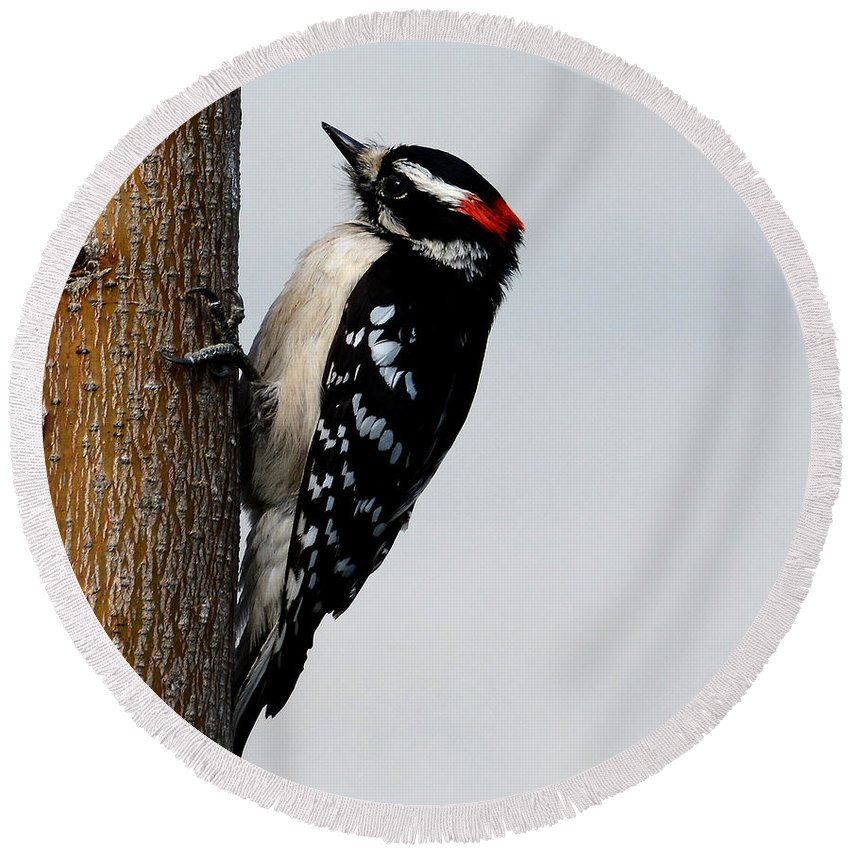 Wood Pecker Round Beach Towel featuring the photograph Wood Pecker by Todd Hostetter