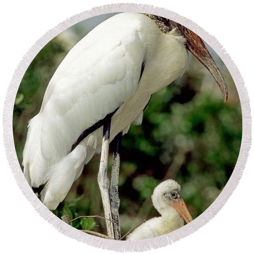 Animal Round Beach Towel featuring the photograph Wood Stork With Nestling by Millard H. Sharp