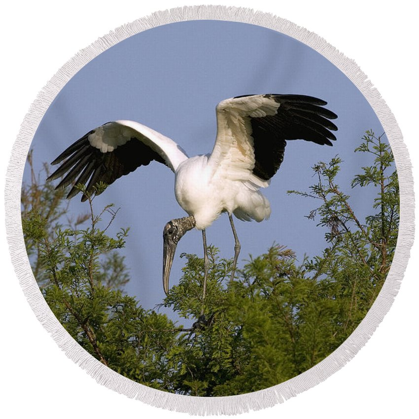 Animal Round Beach Towel featuring the photograph Wood Storks by Anthony Mercieca