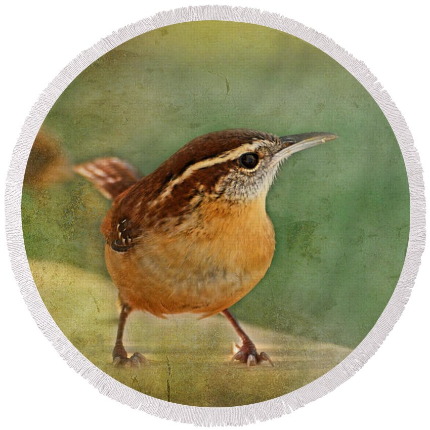 Nature Round Beach Towel featuring the photograph Wren by Debbie Portwood