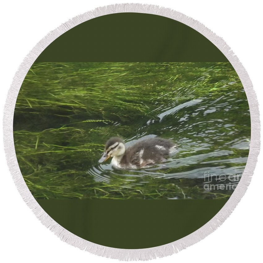 Duck Round Beach Towel featuring the photograph Wye Dale Duckling by John Williams