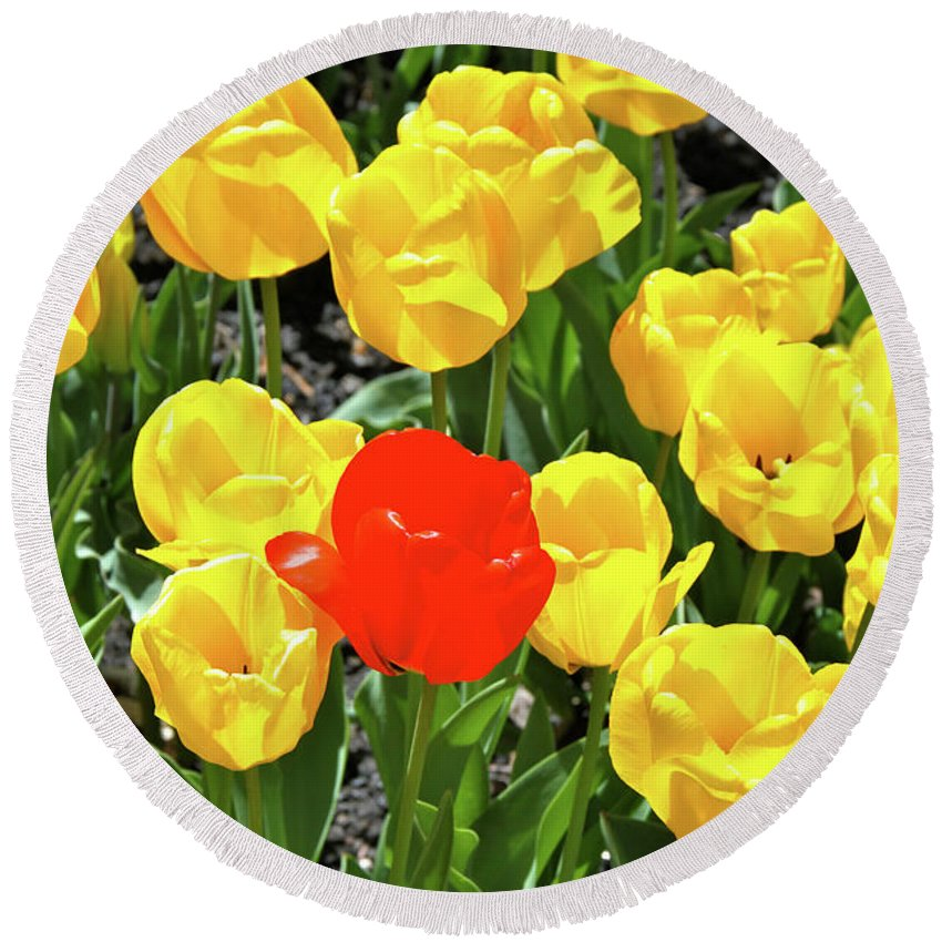 Tulips Round Beach Towel featuring the photograph Yellow And One Red Tulip by Ed Riche