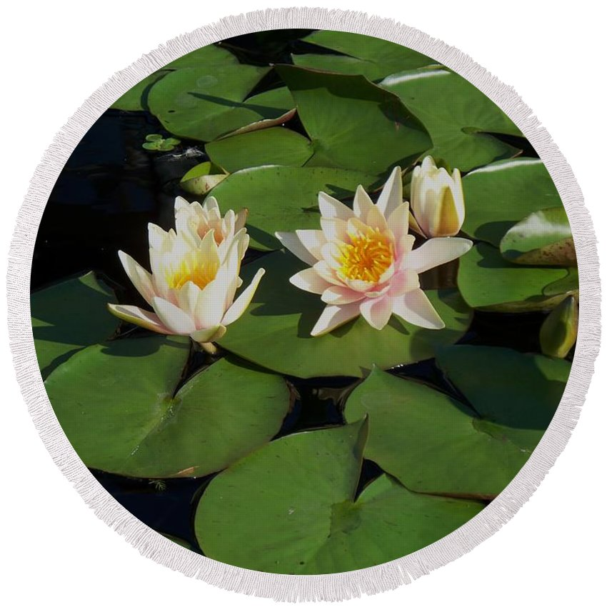 Water Lilies Round Beach Towel featuring the photograph Yellow And Pink Lily by Eric Schiabor