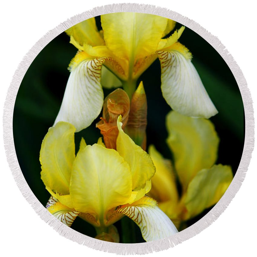 Iris Round Beach Towel featuring the photograph Yellow And White Irises by Jeanette C Landstrom