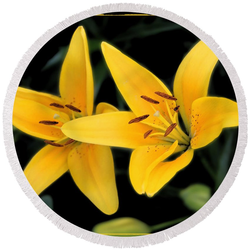 Colorado Round Beach Towel featuring the photograph Yellow Beauties by Bob Hislop