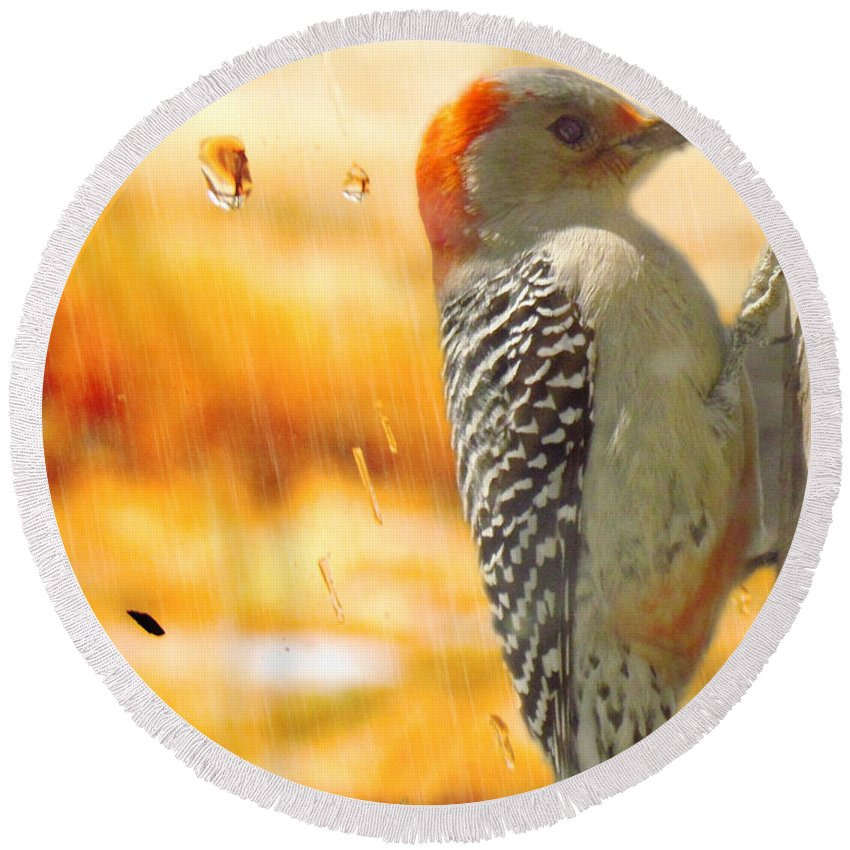 Yellow-bellied Woodpecker. Woodpecker Round Beach Towel featuring the photograph Yellow-bellied Woodpecker by Shannon Story