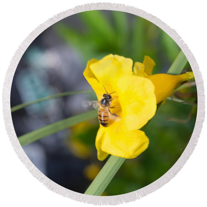 Texas Round Beach Towel featuring the photograph Yellow Bell Flower With Honeybee by JG Thompson