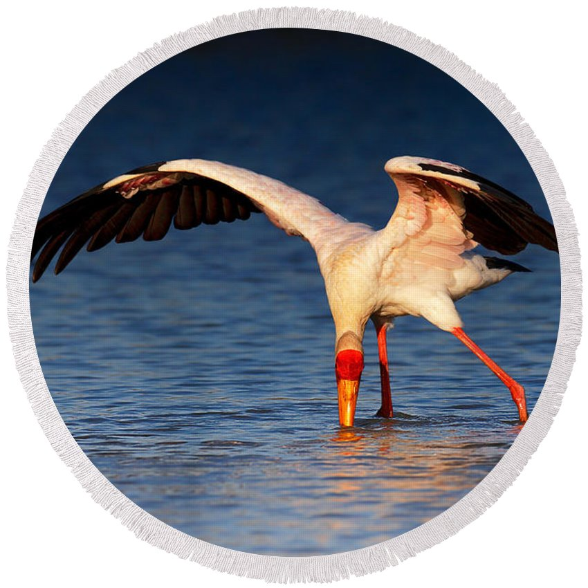 Yellow-billed Round Beach Towel featuring the photograph Yellow-billed Stork Hunting For Food by Johan Swanepoel