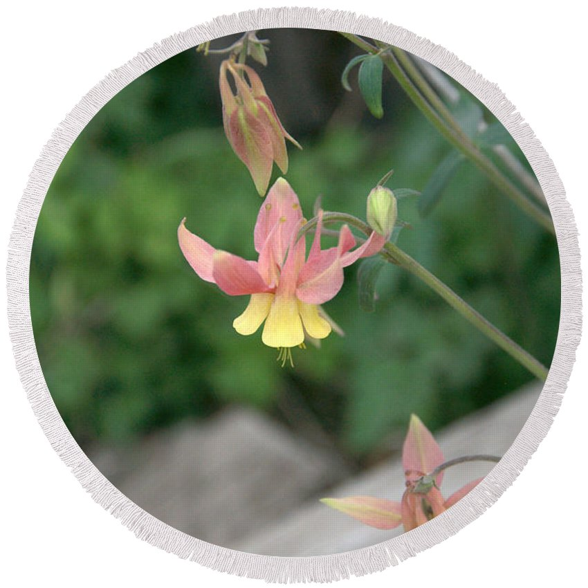 Yellow Round Beach Towel featuring the photograph Yellow Columbine 2 by Frank Madia