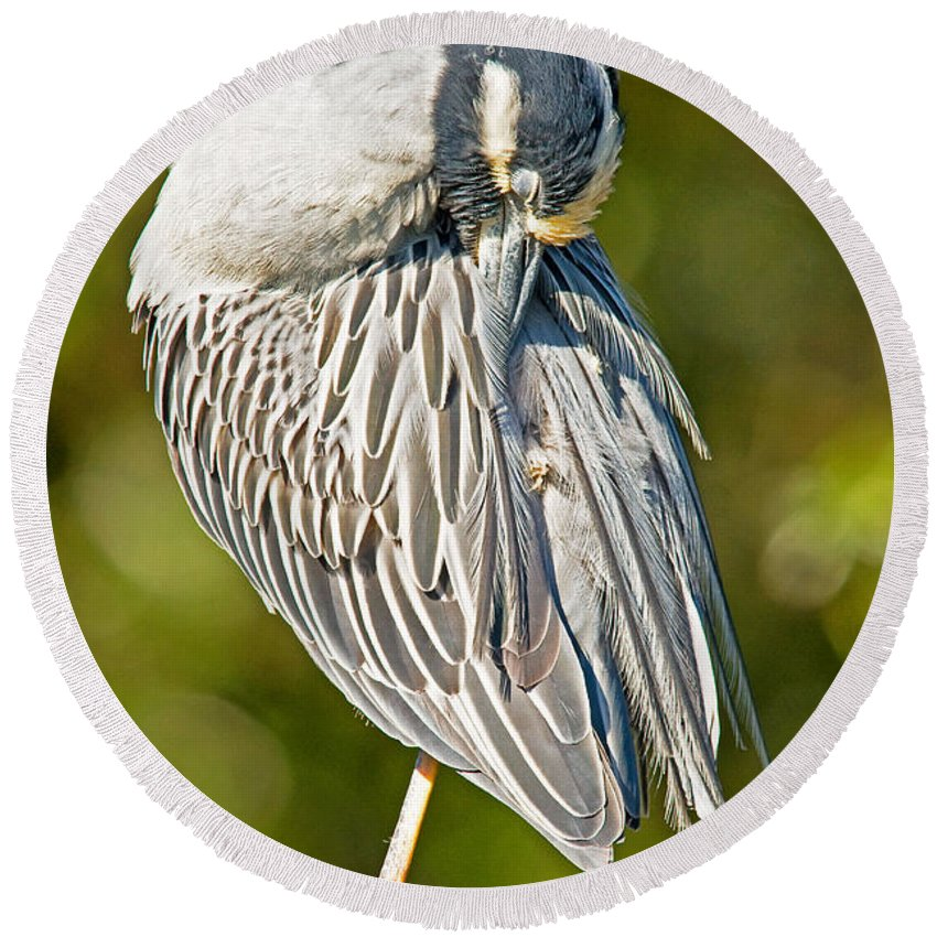 Nature Round Beach Towel featuring the photograph Yellow Crowned Night Heron by Millard H. Sharp