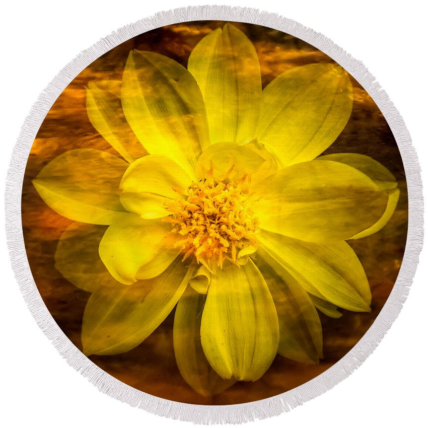 Claude Monet Round Beach Towel featuring the photograph Yellow Dahlia Under Water by Onyonet Photo Studios