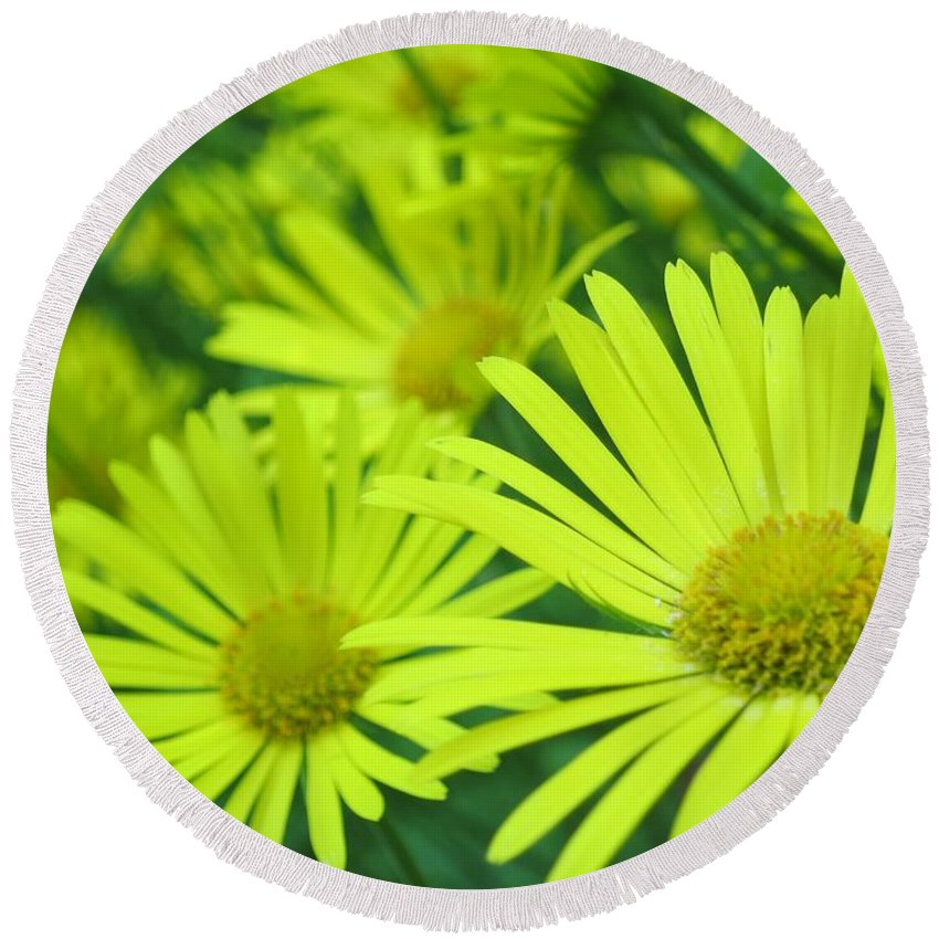 Garden Round Beach Towel featuring the photograph Yellow Daisies Close-up by Lena Photo Art