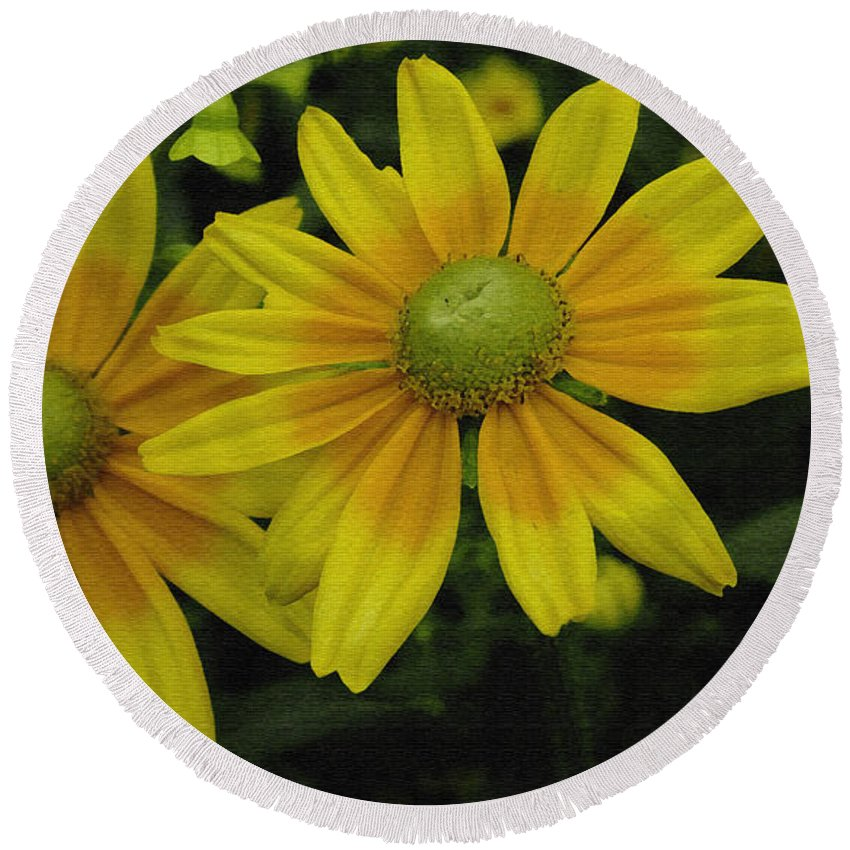 Yellow Daisies Round Beach Towel featuring the photograph Yellow Daisies by James C Thomas