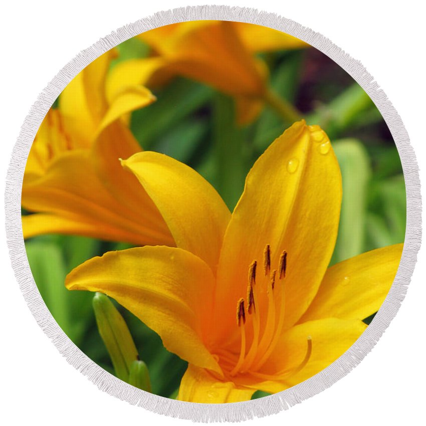 Daylily Round Beach Towel featuring the photograph Yellow Daylily by Pamela Critchlow