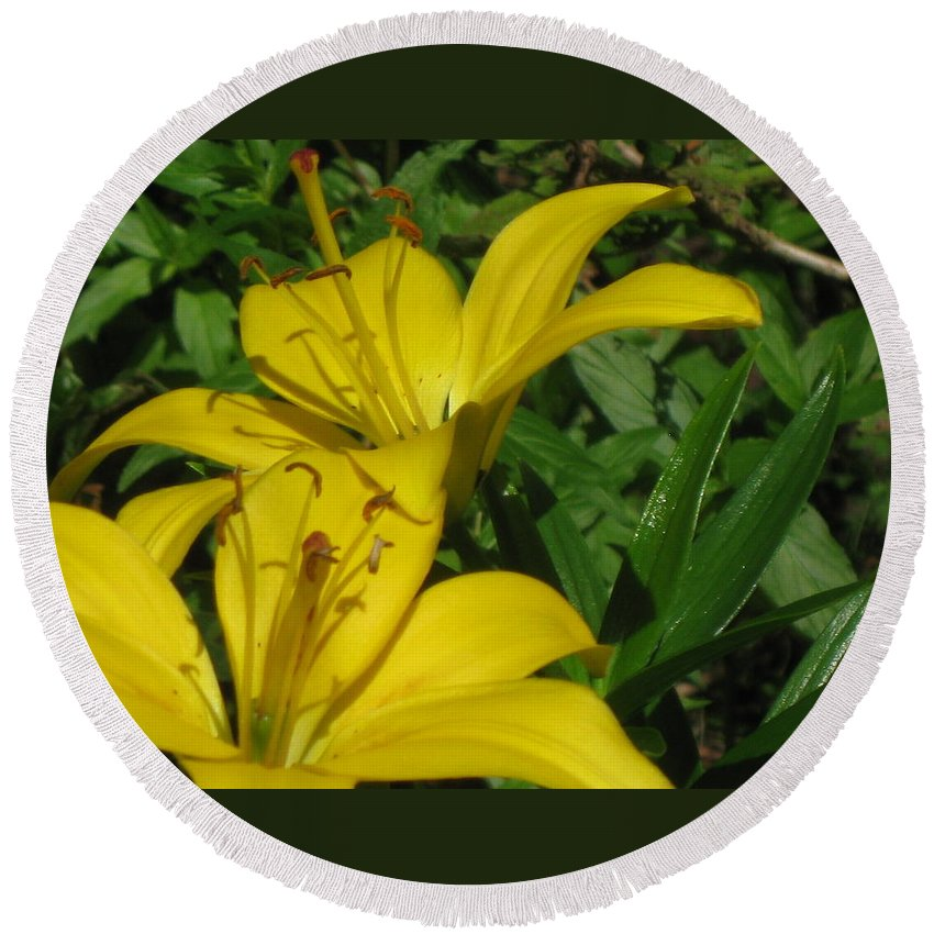Lilies Round Beach Towel featuring the photograph Yellow Easter Lily by Lena Photo Art
