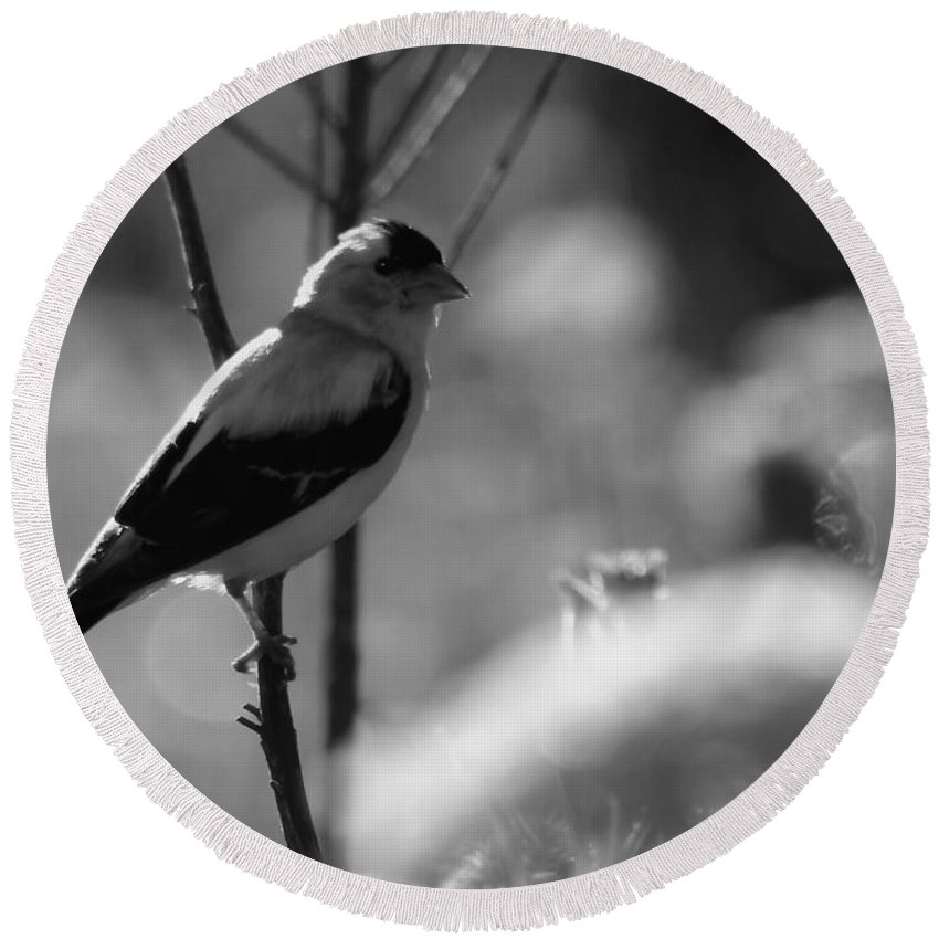 Yellow Round Beach Towel featuring the photograph Yellow Finch B-w by Kenny Glotfelty
