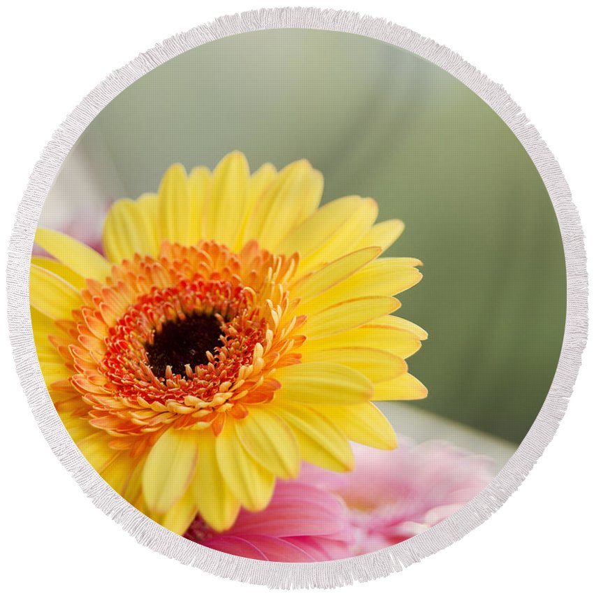 Yellow Gerber Daisy Round Beach Towel featuring the photograph Yellow Gerber Daisy by Ivy Ho