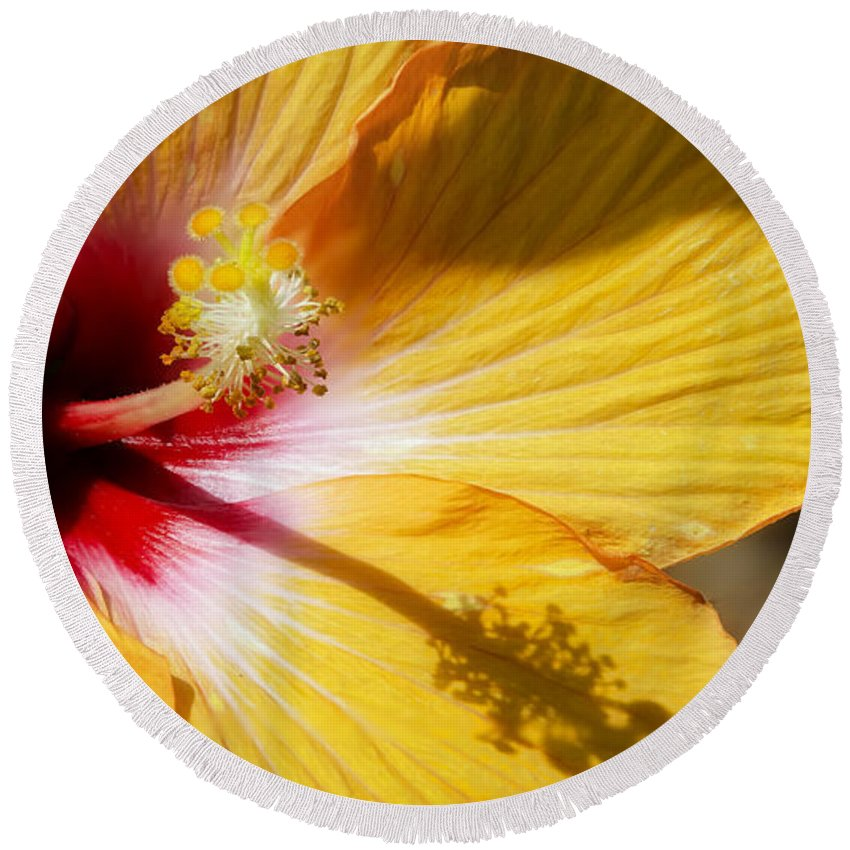 Flower Round Beach Towel featuring the photograph Yellow Hibiscus by Joshua Roberts