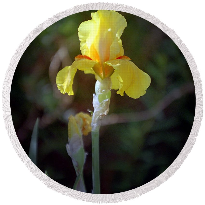 Iris Round Beach Towel featuring the photograph Yellow Iris by Kathy McClure
