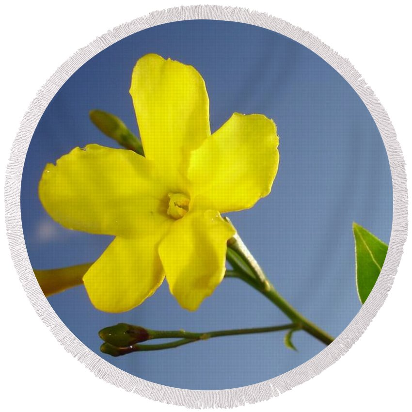Bud Round Beach Towel featuring the photograph Yellow Jasmine Flower And Bud Against Blue Sky by Taiche Acrylic Art