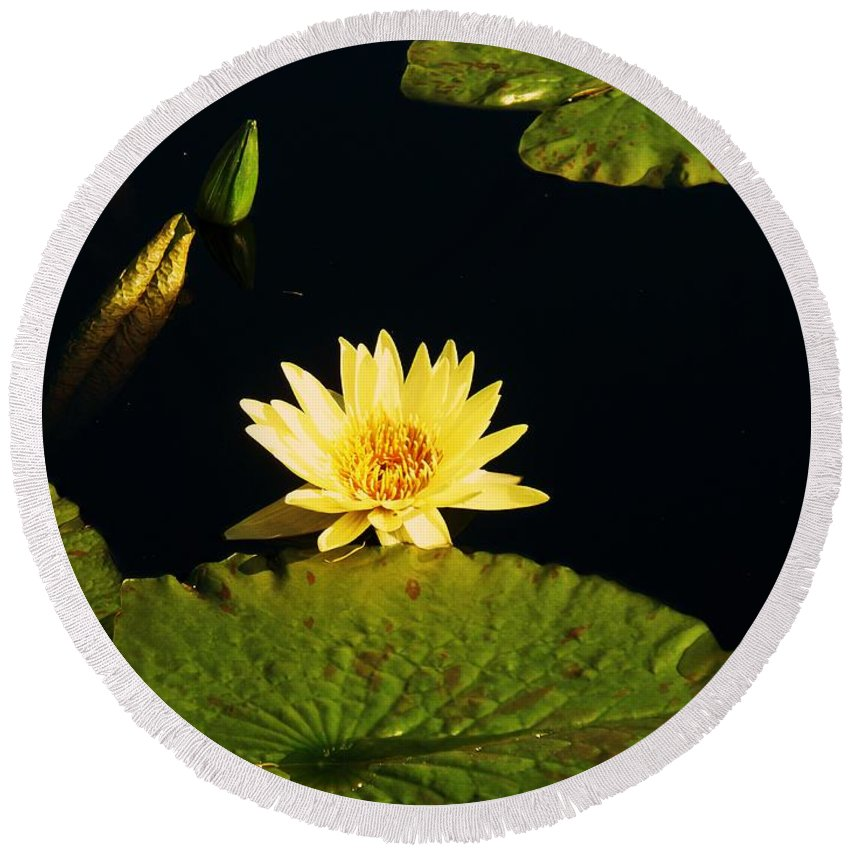 Photograph Round Beach Towel featuring the photograph Yellow Lily by Eric Schiabor