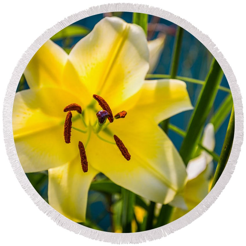 Flower Round Beach Towel featuring the photograph Yellow Lily by Todd Reese