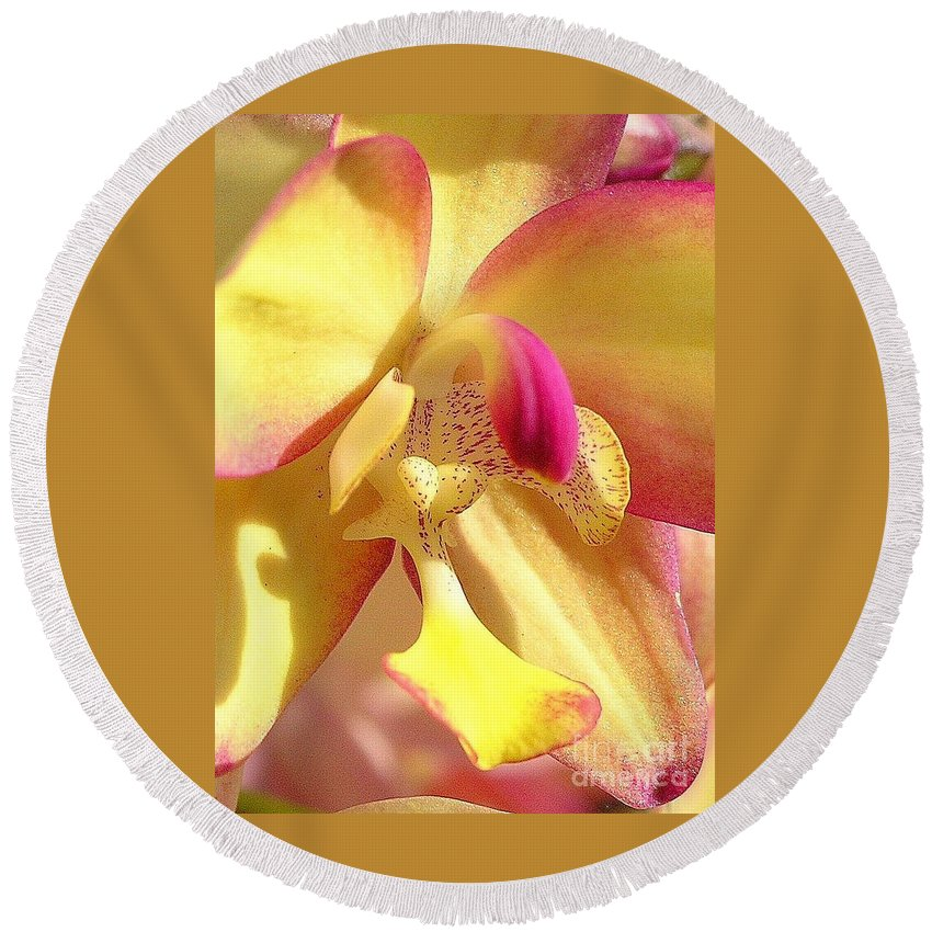 Yellow Round Beach Towel featuring the photograph Yellow Pink Orchid by Mary Deal