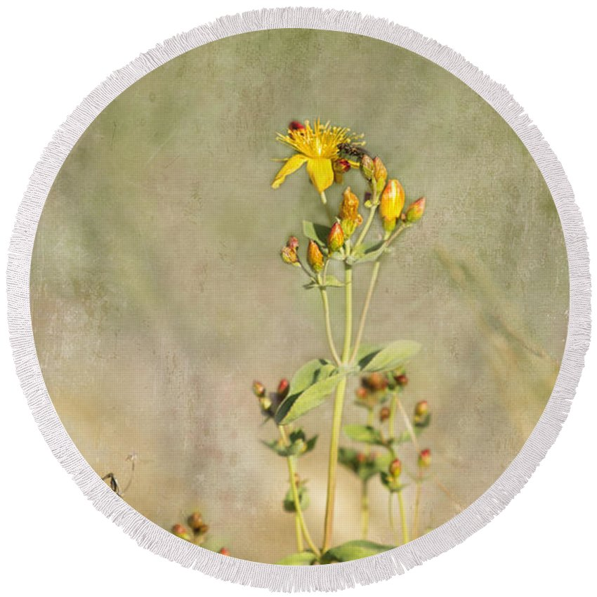 Wildflower Round Beach Towel featuring the photograph Yellow-red Wildflower With Texture by Belinda Greb