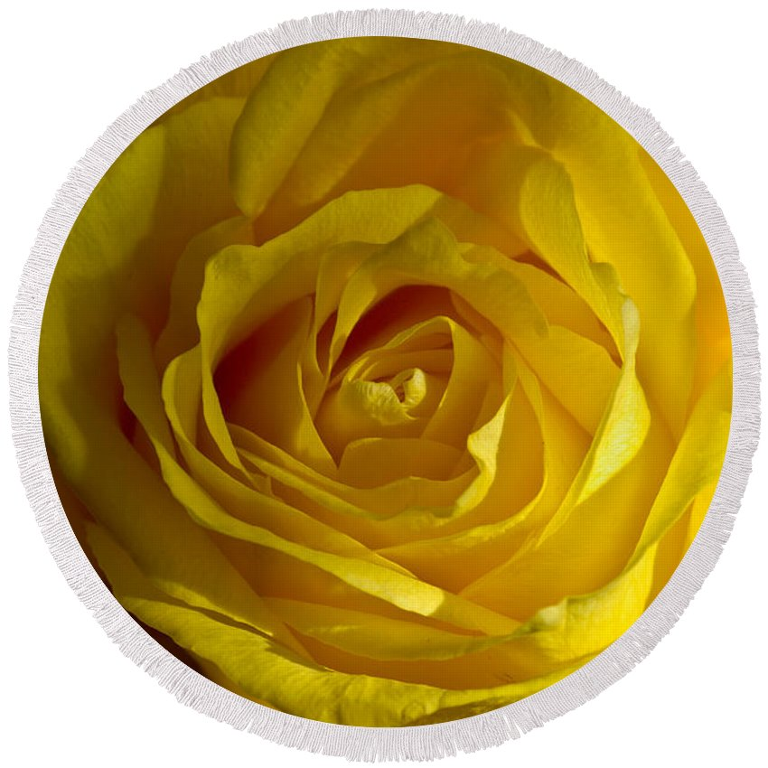 Yellow Round Beach Towel featuring the photograph Yellow Rose by Anthony Sacco