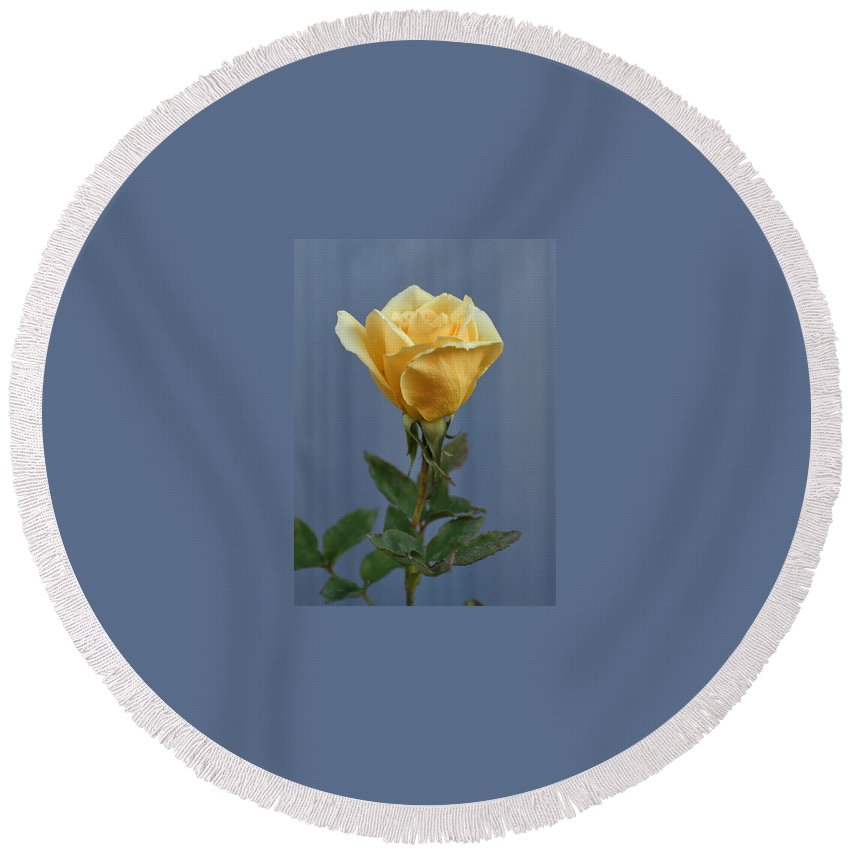 Yellow Rose Round Beach Towel featuring the photograph Yellow Rose Greeting Card by Ernie Echols
